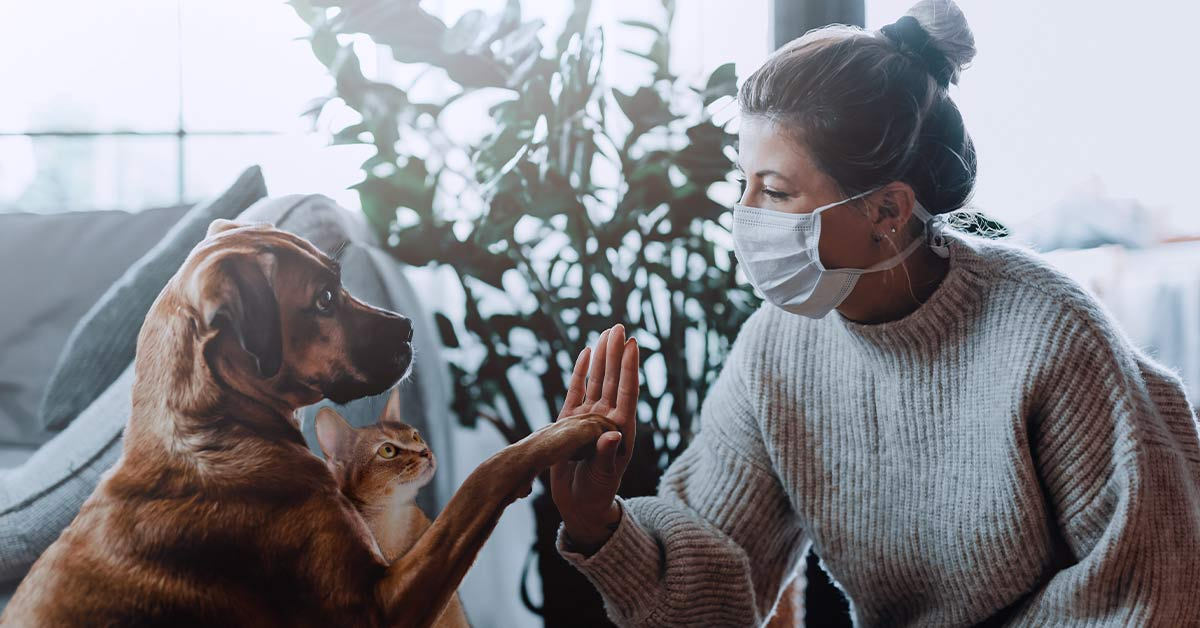 Mascotas, los otros héroes de la pandemia | Universidad Ean